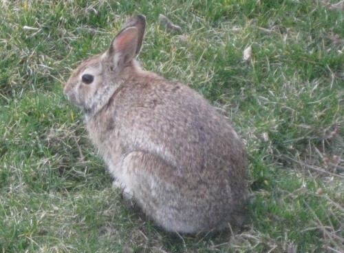 A non-helping animal. I photographed him in my yard last Sunday, contributing nothing to society.