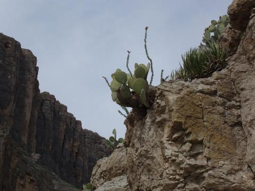 Another photo from a trip to Big Bend several years ago.