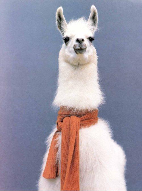 llama original